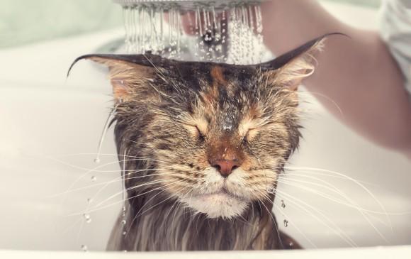 Bañar Un Gato | Banar Al Gato Si Pero No Tanto