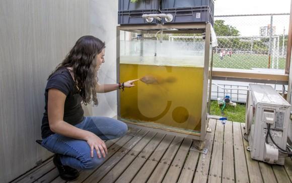 El sistema de acuaponía del Smart Living Lab ubicado en UPB, comprende la producción de hortalizas como la lechuga y un cultivo de peces del tipo tilapia roja. FOTO Jaime pérez Munévar