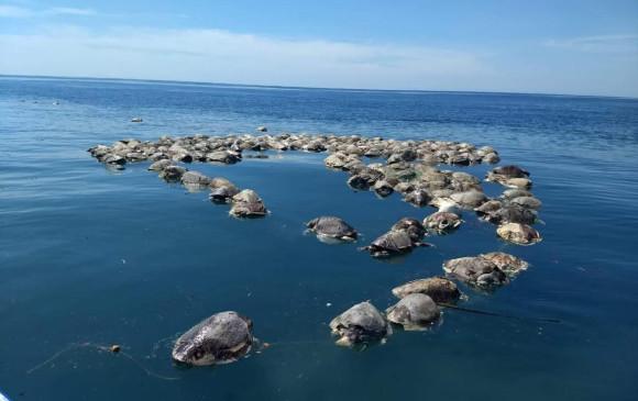 Hallan cientos de tortugas muertas en el Pacífico mexicano