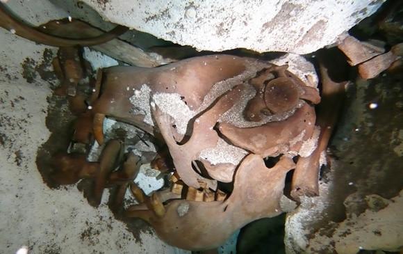 Hallan en México fósil de perezoso gigante