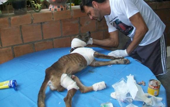 Este es Francisco de Jesús, el perro rescatado en Brasil con una herida abierta en su pata y oreja y lleno de gusanos. El perrito fue salvado. FOTO Cortesía