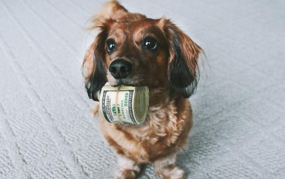 Los perros son listos, inteligentes, pero estudio dice que nada del otro mundo. Foto Ota