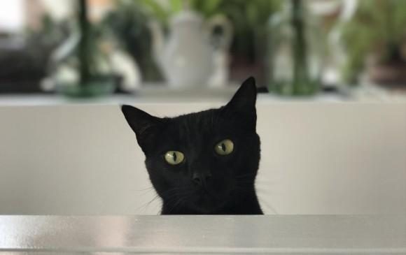 Google Photos ahora identifica el rostro de tus mascotas