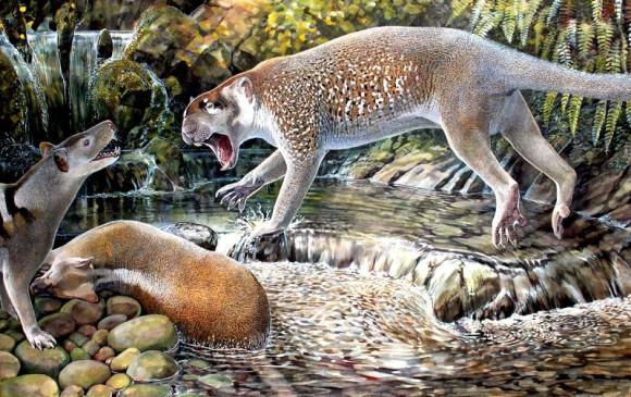 El león marsupial (Wakaleo shouteni) de Australia, que vivió hace unos 23 millones de años. Pesaba unas 50 libras y fue encontrado recientemente. Foto iise