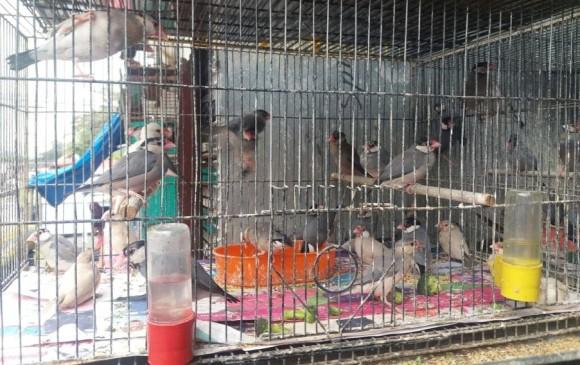 Piden que se construya módulo de fauna en la Plaza Minorista de Medellín