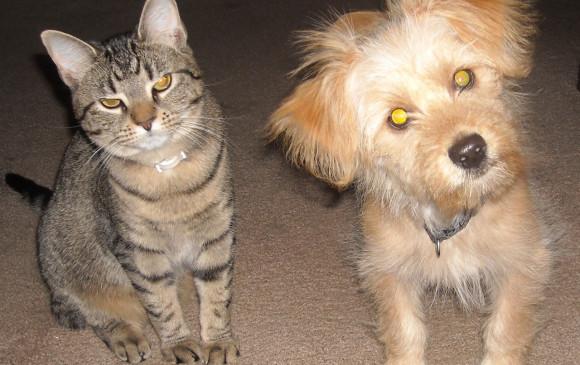 Investigación revela quién es más inteligente: ¿el perro o el gato?