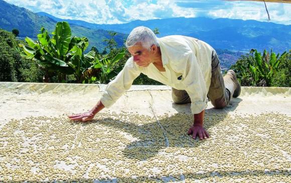 Pedro Quintero distribuye el café en la marquesina para secarlo. FOTO Donaldo Zuluaga