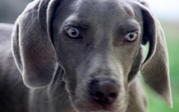 Atención a perros y gatos este viernes en Hospital Veterinario U. de A. Foto Archivo