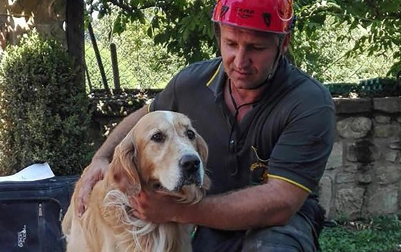 Romeo, es el nombre del perro que fue rescatado debajo de los escombros en Amatrice, una de las ciudades más golpeadas por el terremoto en Italia. FOTO AP
