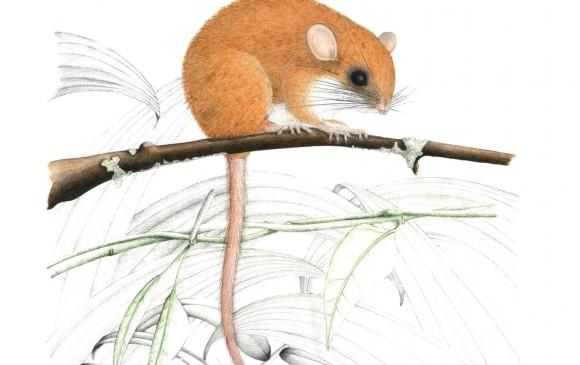 Así hallaron las 14 especies nuevas en Anorí