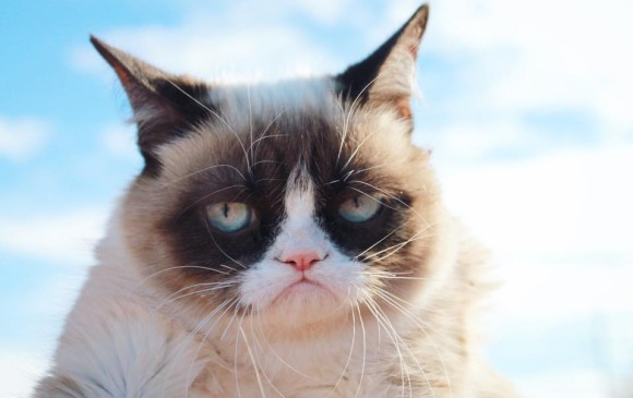 Foto: The Official Grumpy Cat
