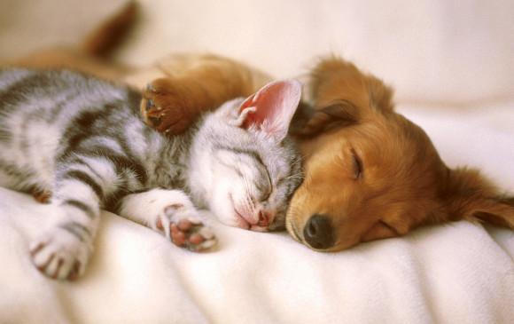 Estudio sugiere parabenos enferman a gatos y perros. Foto Kitty-Green
