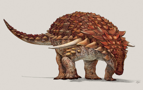 Así era el dinosaurio del que encontraron sus fósiles. La ilustración es del Museo Royal Tyrrell de paleontología en Drumheller (Alberta). Imagen AFP
