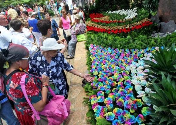 Orqu deas p jaros y flores decoran el jard n bot nico for Calendario jardin botanico 2016