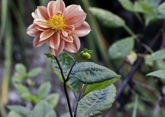 Conozca las plantas ornamentales for 20 plantas ornamentales