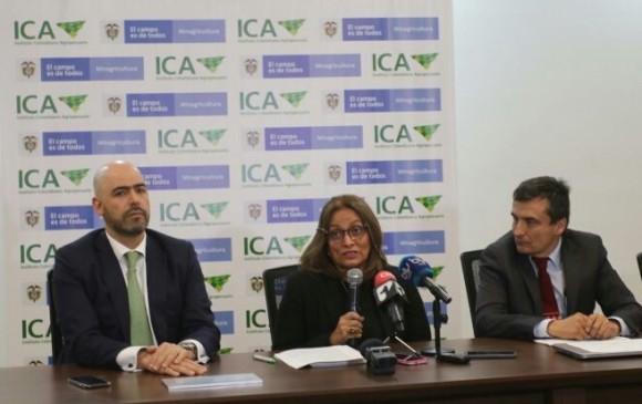 ICA confirmó presencia de hongo Fusarium Raza 4 Tropical en La Guajira