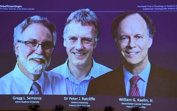 Los estudios que ganaron el premio Nobel de Medicina