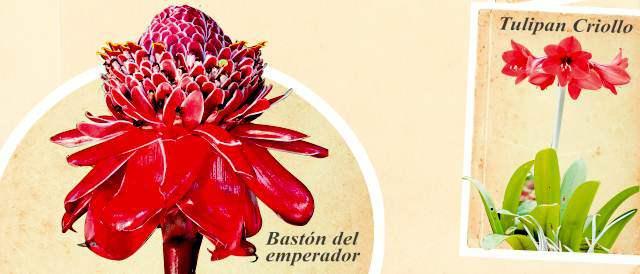 Gu a para cazar 470 plantas ornamentales for Cuales son las plantas ornamentales