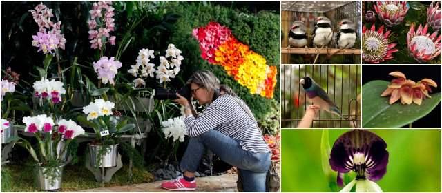 Orquídeas y aves colorean Medellín