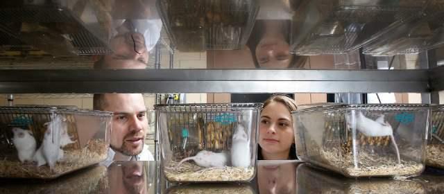 Ojo: animales en experimentos