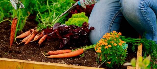 Las verduras al alcance de la mano for Cultivo de verduras en casa