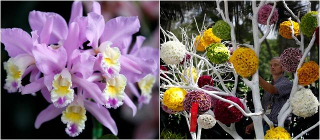 Orqu deas p jaros y flores m s bella que nunca for Bodas jardin botanico medellin