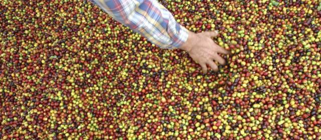 Resultado de imagen para cascara cafe