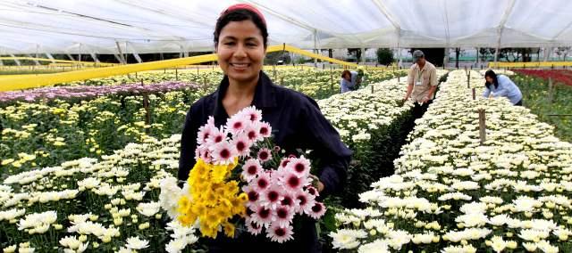 Los 10 Mejores Celulares Del Mundo Hoy Día 2014 El: Los Floricultores Vivirán Hoy Su Mejor Día Del Año
