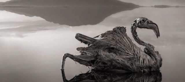 Lago en Tanzania convierte a las aves en estatuas