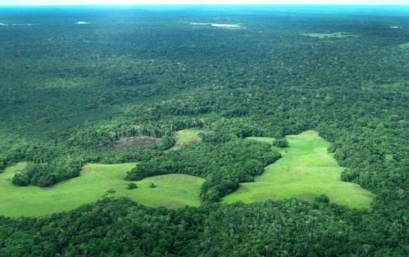 Corte ordenó al gobierno detener la deforestación en la Amazonía. Foto Instituto Sinchi