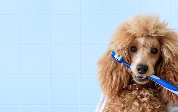 A los perro también se les lava los dientes. Lea cómo más abajo. FOTO Sstock