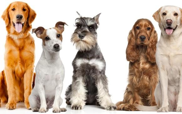 Qué Razas De Perros Son Mejores Para Los Niños