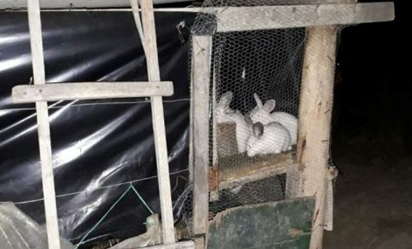 Mujer encerró a su hijo en jaula para conejos porque perdió el año escolar — Boyacá