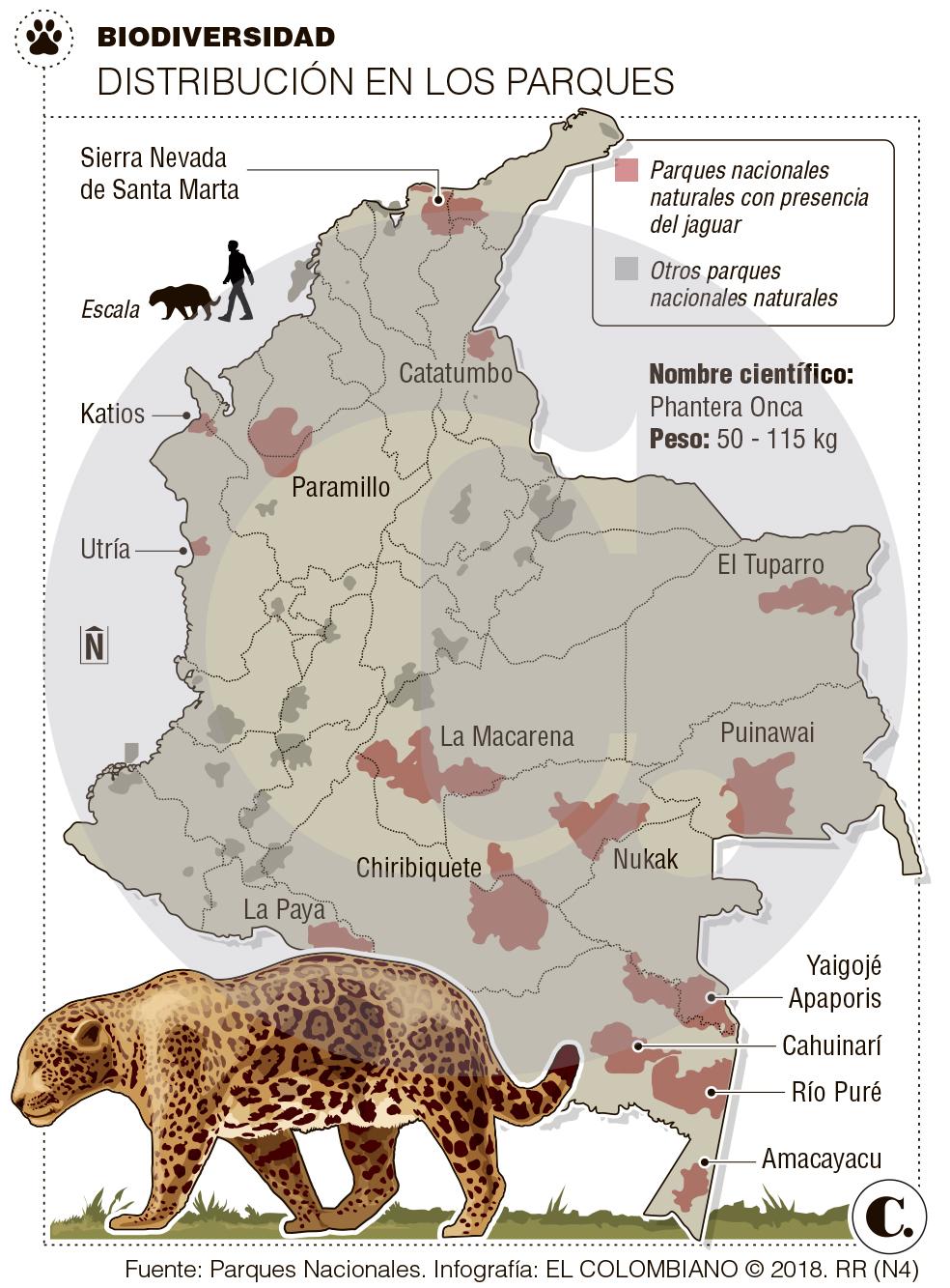¿Qué hacer para salvar el jaguar en el país?