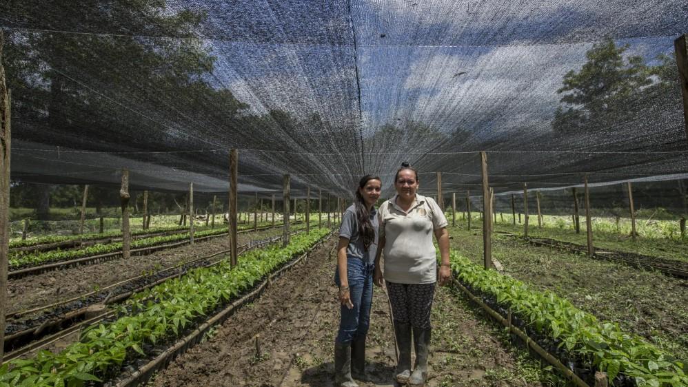 En las veredas Las Nubes y Todos los Santos de Arauca, campesinos como María Ramos y sus hijos estudian cómo sembrar y obtener el mejor cacao con un concepto empresarial. Foto: Santiago Mesa