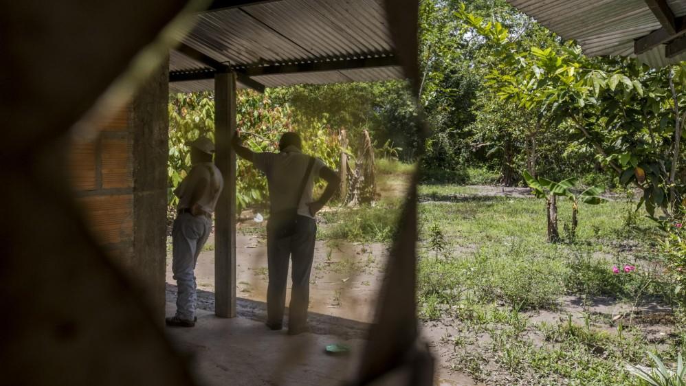 1.300 personas decidieron cambiar los cultivos de uso ilícito por otro tipo de sembrados como el cacao. Foto: Santiago Mesa.
