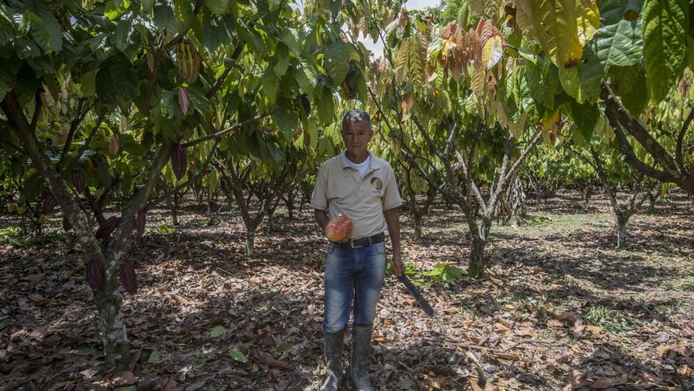 En las sus fincas, internadas en llanuras araucanas, donde el calor se tolera poco y se siente como un fuego que arde en la piel, se produce el mejor cacao del mundo. Foto: Santiago Mesa.