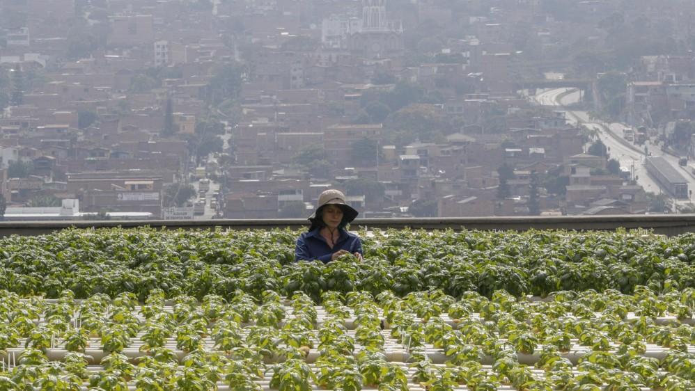 En Terrazas De Medellín Cultivan Sin Tierra