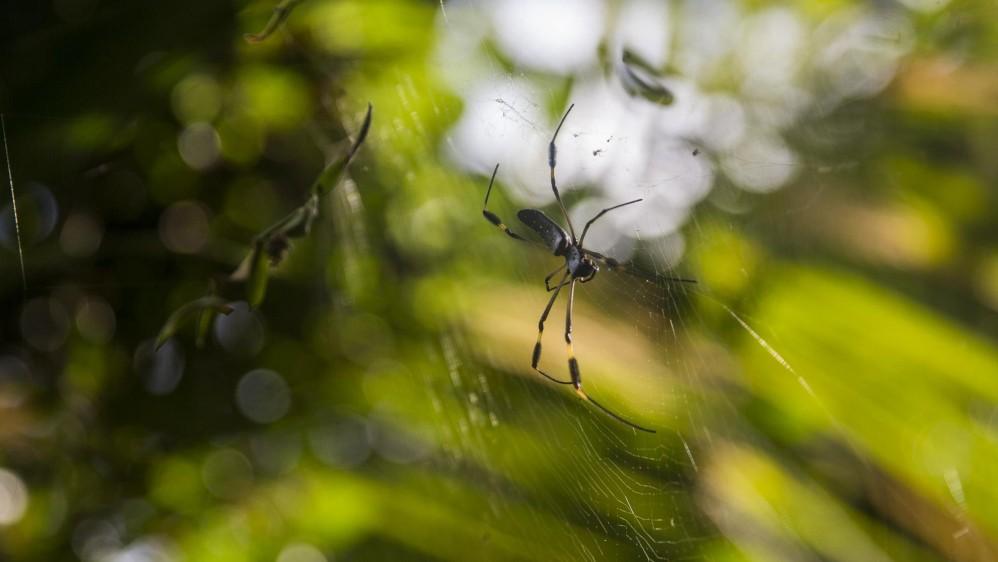 Los migrantes de Asia y África dicen temer mucho a los animales de la selva porque no los conocen, la mayoría expresa que las arañas por su picadura venenosa y los mosquitos por la transmisión de enfermedades como la malaria son su mayor miedo. Foto: Esteban Vanegas