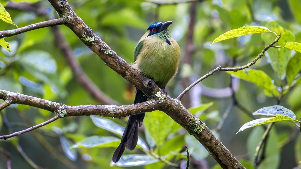 El Barranquero, también llamado Soledad, por permanecer solo o pájaro péndulo por la forma de su cola. FOTO: JUAN ANTONIO SÁNCHEZ OCAMPO